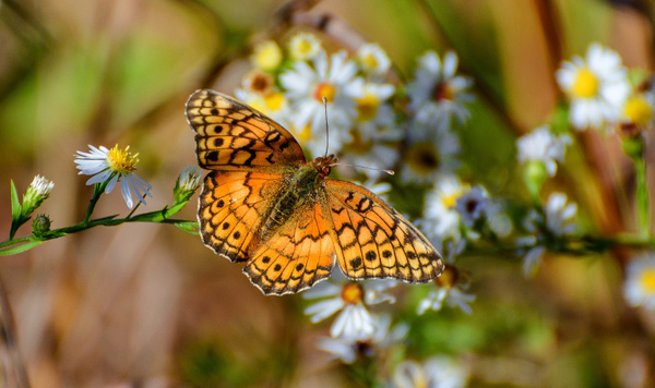Insects, Dragonflys & Butterflys by ClipperK