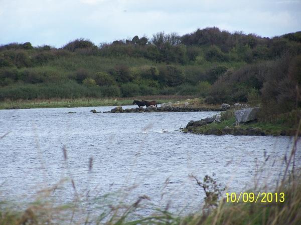 Ireland Trip 102 by Carol Alexander