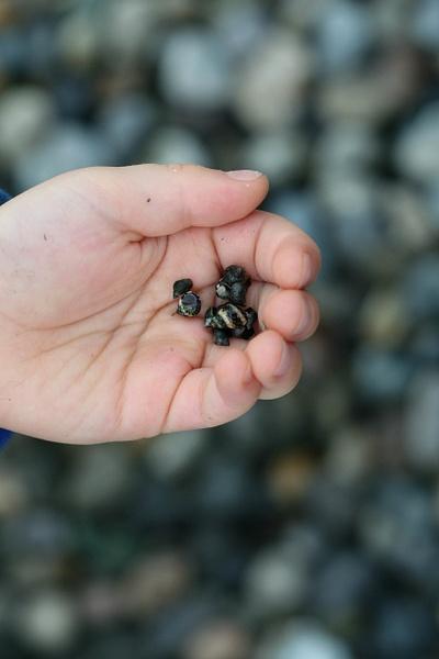 hand snails by LeslieElliott