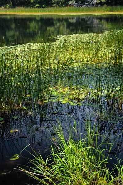 2 Cape Cod Pond by SusanAudette91359