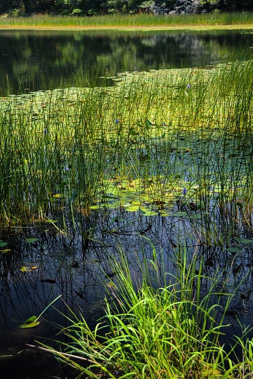 2 Cape Cod Pond