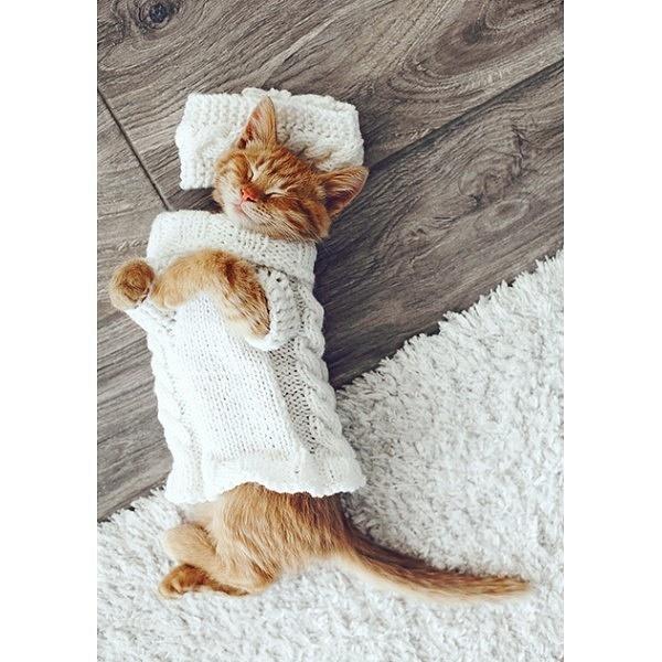 cat on the floor-1-600x600