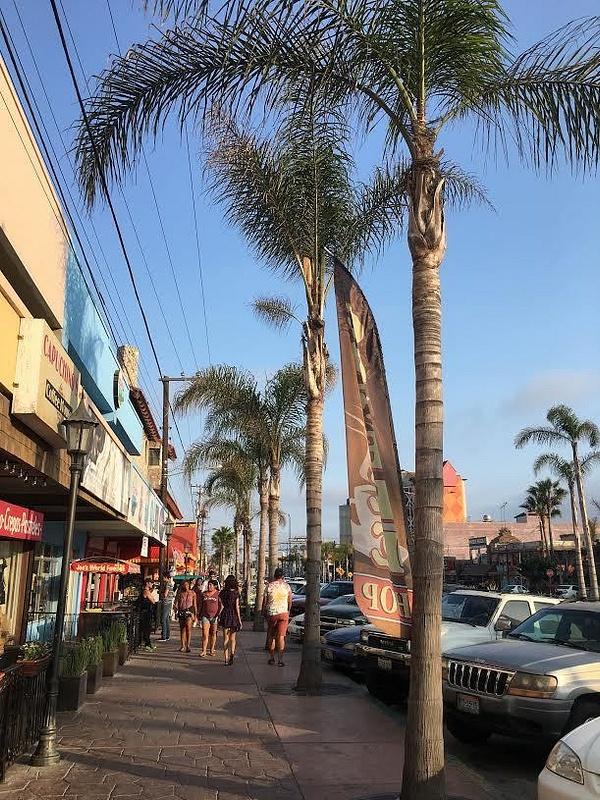 palm_trees_part_2