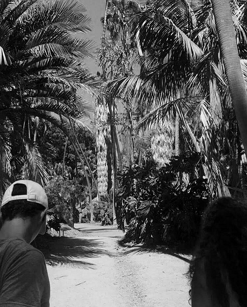 Balboa Palm Trees by EmelyBianka