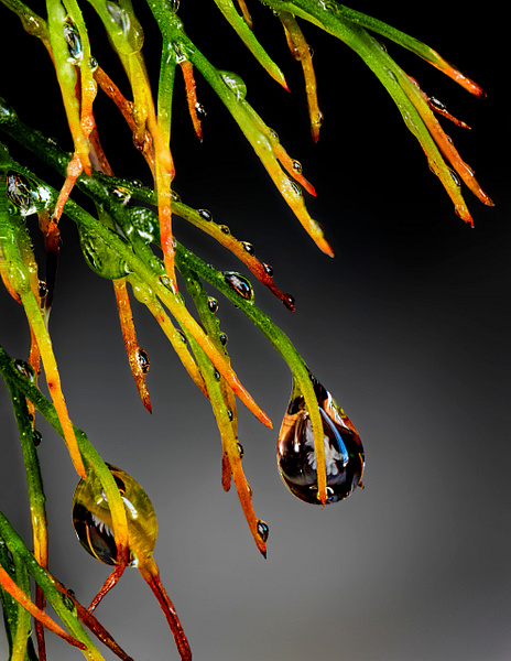 9 Grass and Drops 7947 (5-3-17) by FotoClaveGallery