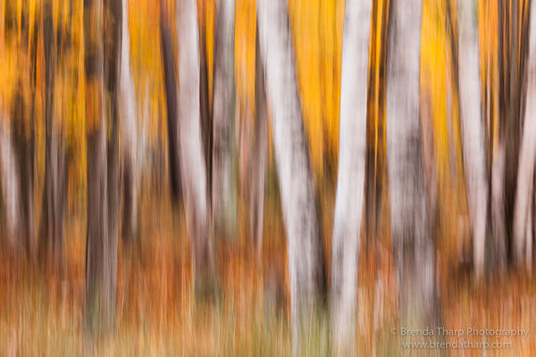 Tharp_20121005-9787 by FotoClaveGallery