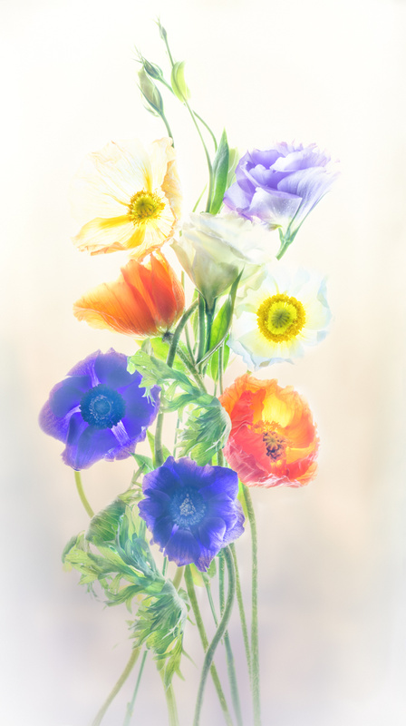 Nature's Beautiful Colors