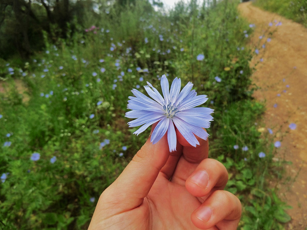 Wild flower by Katie98