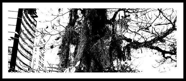 50-Tons-de-Cinza (21) by marcomachado