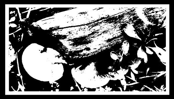 50-Tons-de-Cinza (355) by marcomachado