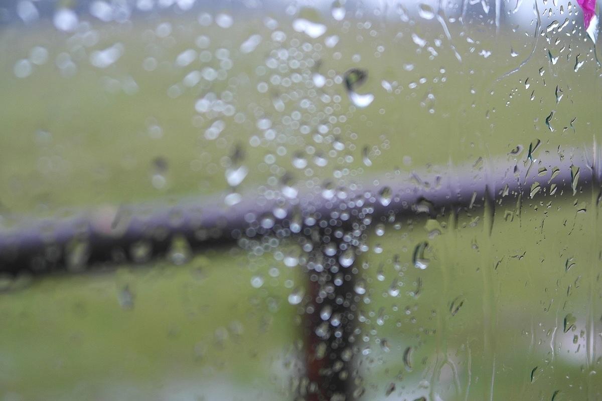 Дождливое утро