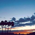 Silhouette_davis_p1
