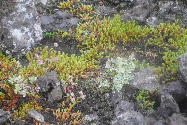 More moss :) by Maria Dzeshchanka