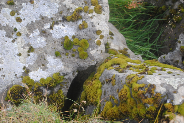 Didn't know before that moss can be so nice and various :) by Maria Dzeshchanka
