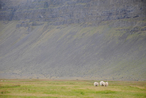 More sheep :) by Maria Dzeshchanka