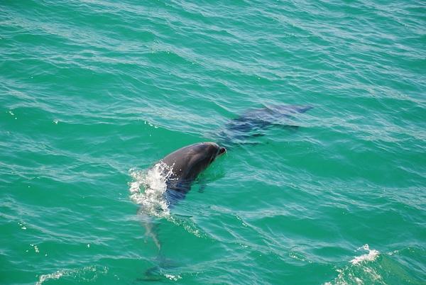 Dolphins :) by Maria Dzeshchanka