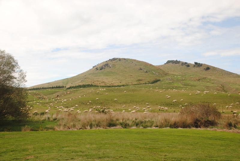 On the road from Dunedin to Invercargill