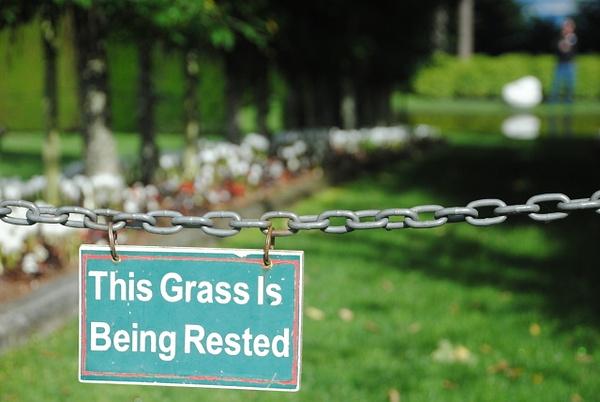 Tired grass in Larnach Castle by Maria Dzeshchanka