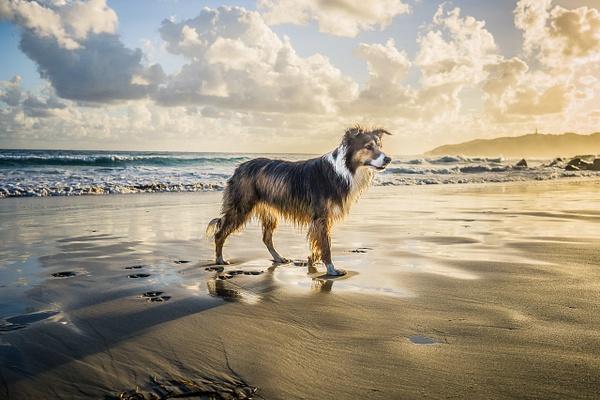 Online puppy training by JohnWebpuppy