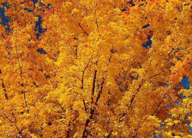 Fall Colors in WA