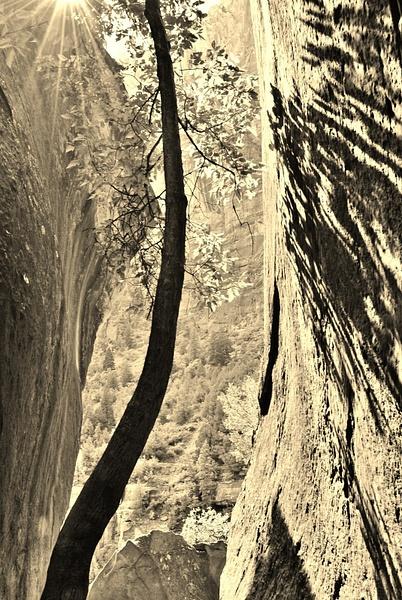 tree meets rock by Angelika