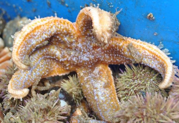 starfish hug by Angelika