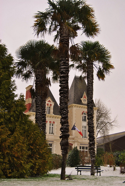 palm trees covered in snow by Angelika