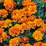 Вставка Цветов  апрель 2012