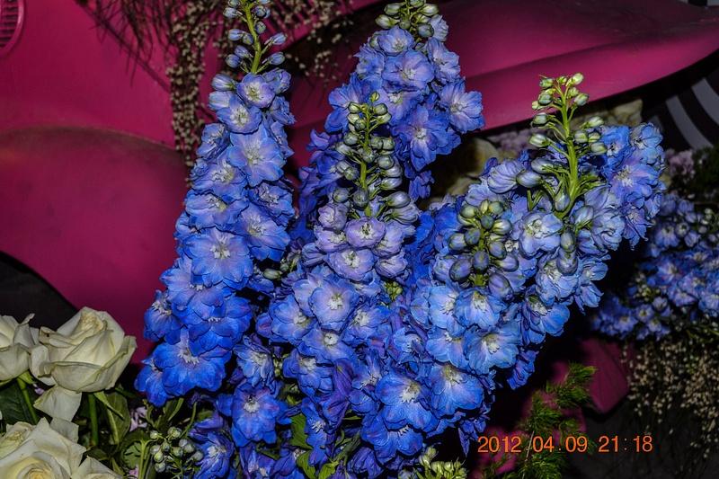 цветы_382