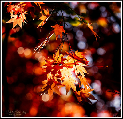 A Burst Of Autumn