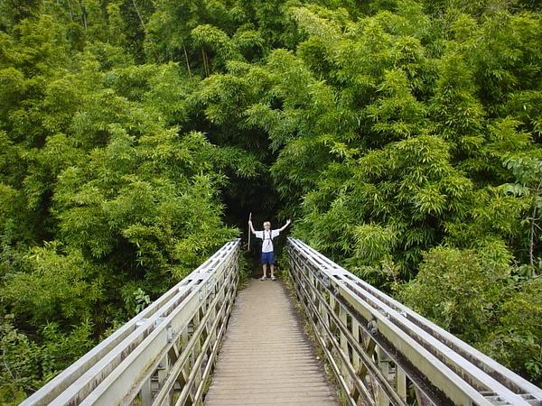 Bridge-Bambo_.2 by CharlesStevens
