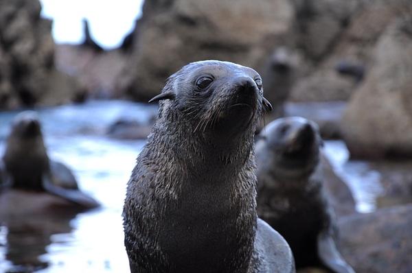Seals, Kaikoura NZ by soulJAH