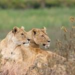 Africa - Kenya&Tanzania SAFARI
