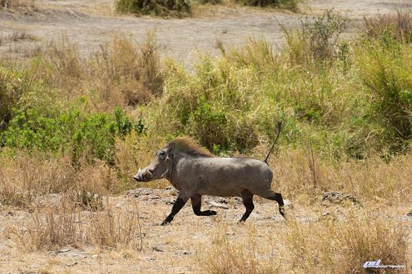 Serengeti by soulJAH