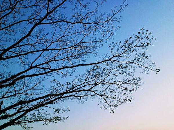 tree branch by RollyTanchanco