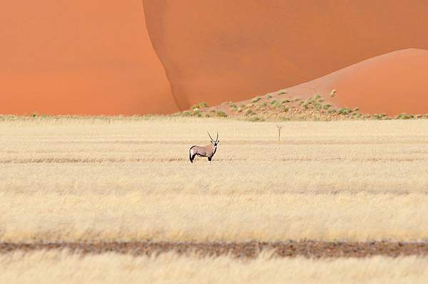 orice nel Namib