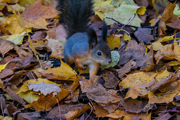 Squirrels by dimelord