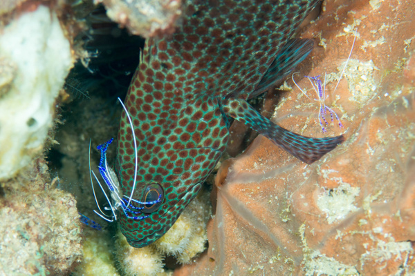 2015Mar Dominica Dive 6: Soufriere Pinnacles by Willis Chung