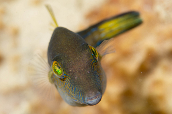 2015Mar Dominica Dive 8: Champagne Reef by Willis Chung