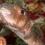 2015Apr Dominica Dive 9: Scottshead Point