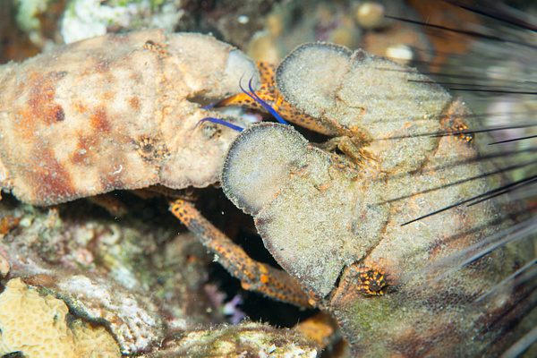2015Apr Dominica Dive 15: Lab'ym - Dangleben's North by Willis Chung