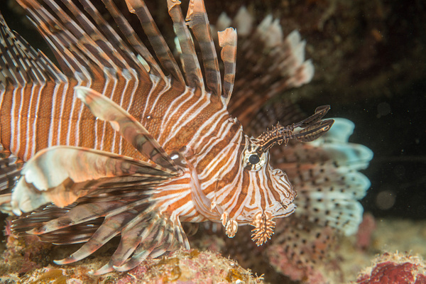 2016Mar Roatan Dive 2 Prince Albert by Willis Chung