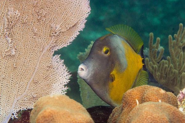 2016Mar Roatan Dive 9: French Cut Cay by Willis Chung