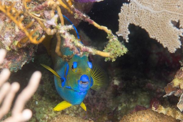 2016Mar Roatan Dive 11: Ventana Del by Willis Chung