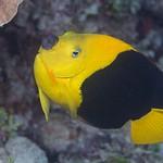 2016Mar Roatan Dive 14: Mr Bud Wreck