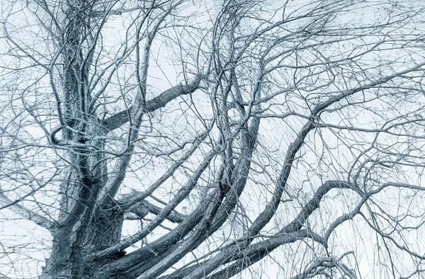 Tree Series by Ellen Lee