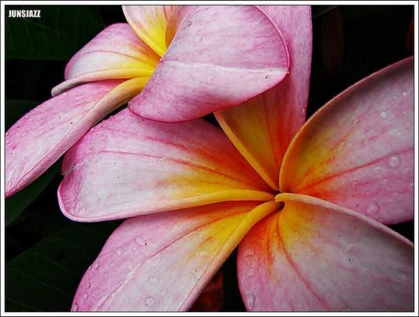Flora  Fauna 21