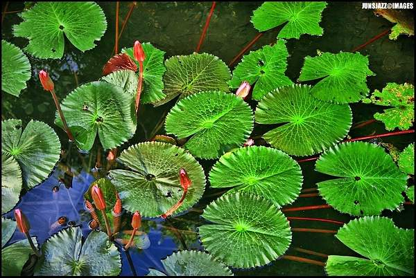 Flora  Fauna 22