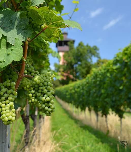 Stuttgart - Wine trial