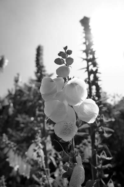Spetchley Gardens